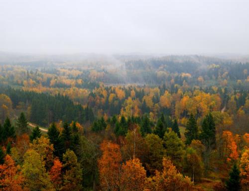 Kas metsa hind on kõrgeim Eesti metsarikkamates piirkondades?