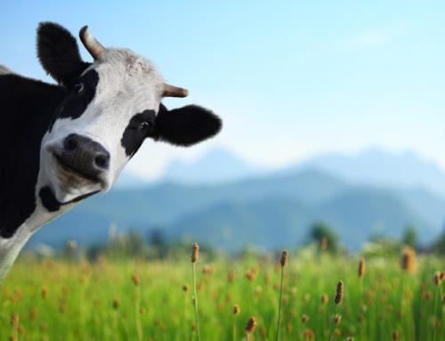 Põllumaa hinnad Euroopa vs. USA – kus on soodsam?