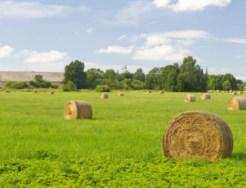 Kus on kõige kallim ja kus kõige odavam põllumaa Eestis?