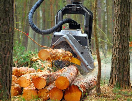 Puidu hind Eestis on kõrgem kui kunagi varem – kas õige aeg müüa metsa või metsamaad?