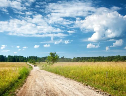 Millal tehakse kõige rohkem põllumaade ostu ja müügi tehinguid Eestis?
