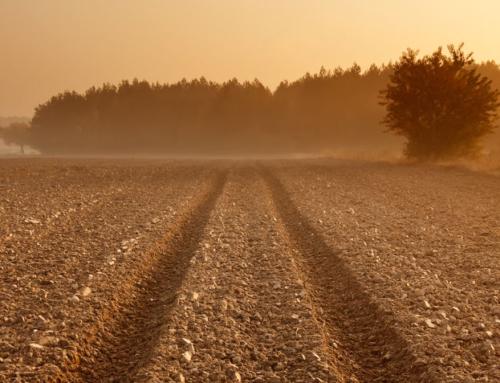 Haritava maa hind on saavutanud rekordtaseme – õige aeg müüa põllumaad?
